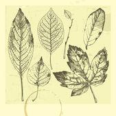 秋天的树叶 — 图库矢量图片