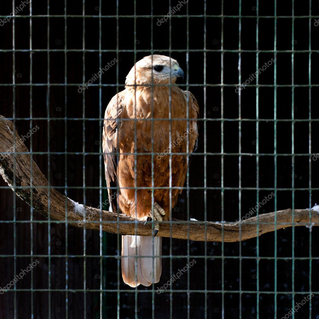 Hawk in zoo — Stock Photo #6965319