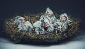 Conceptual photo of a nestling child — Stock fotografie