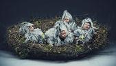 Fotografía conceptual de un niño polluelo — Foto de Stock