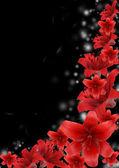 黑色背景上的红色百合 — 图库照片