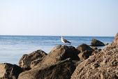 Sea gull on stone — Stock Photo