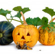 Halloween Pumpkin — Stock Photo #7457177