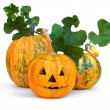 Halloween Pumpkin — Stock Photo #7457211