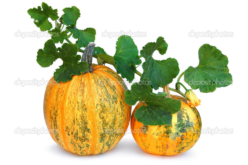 Halloween pumpkin vegetable fruit isolated on white background  — Stock Photo #7457206