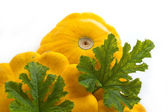Pumpkin - Cucurbita pepo — Stock Photo