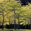 Forest in spring time — Stock Photo