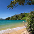 Stock Photo: Beach in Marlborough Sounds