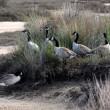 Brant  in the Abel Tasman National Park - Stock Photo