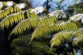 Green fern — Stock Photo