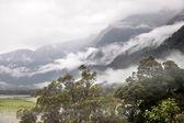 Haast sis bulutları ile geçmek — Stok fotoğraf