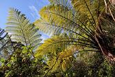 Fern trees in the Abel Tasman National Park — Stock Photo