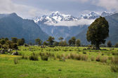 Looking to Mount Cook from Fox village — Stock Photo