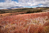 Meager landscape in the Tongariro National Park — Stock Photo