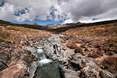 Creek in het tongariro national park — Stockfoto