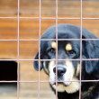 Dog in cage — Stock Photo #6903536