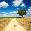 Road in the field - Stockfoto