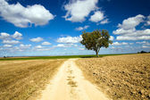 Road in the field — Stock Photo