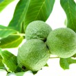 Green walnut — Stock Photo