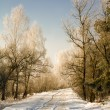 Rural road (winter) — Stock Photo