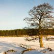 Tree at the frozen lake — Stock Photo
