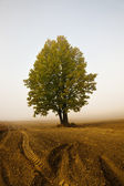 Tree in a fog — Stock Photo