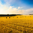 Agriculture — Stock Photo #7812800