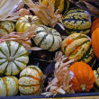 Pumpkins and Gourds — Stock Photo #7389271