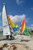 Small SailingCatamaran — Stock Photo