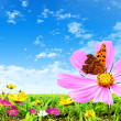Stock Photo: Flower and butterfly