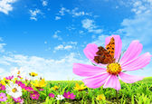 Flower and butterfly — Stock Photo