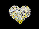 Papatya kalp — Stok fotoğraf