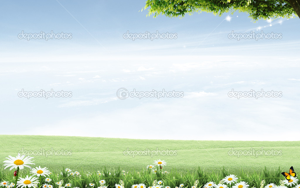 Field of daisies and perfect sky — Stock Photo #7526738