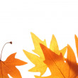 Autumn leaves — Stockfoto #6875703