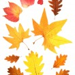 Set of autumn leaves — Stock Photo #6876016