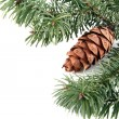 Cone with branches — Stock Photo #6953143
