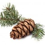 Pine cone — Stock Photo #7652579