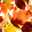 Autumn background — Stock Photo #7652646