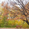 Stock Photo: Lonely bench in autumn park