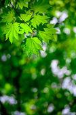 Lente bos achtergrond — Stockfoto