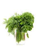 Parsley and dil — Stock Photo