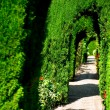 Alhambra garden — Stock Photo