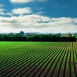 Agricultural field and blue sky — Stock Photo
