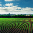 Stock Photo: Agricultural field and blue sky