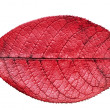 Fall red leaf — Stockfoto