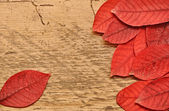Autumn leaves over wooden background. — Stock Photo