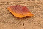 Yellow autumn leaf on wooden background — Stock Photo