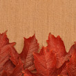Autumn leaves over burlap background — Stock fotografie