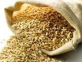 Burlap sack of wheat — Stock Photo