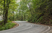 Road in the jungle — Stockfoto